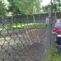 c_120_120_16777215_00_images_strusia-ferma-2012_02-10-2012-2.jpg